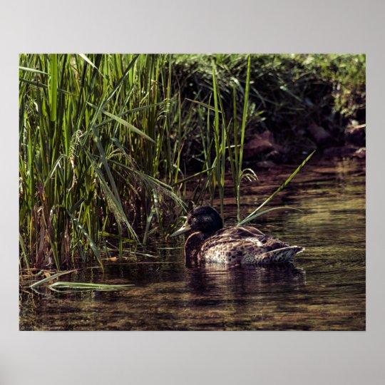 池の端 ポスター