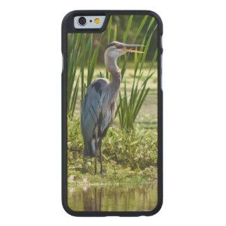 池の素晴らしい青鷲の鳥 ケース