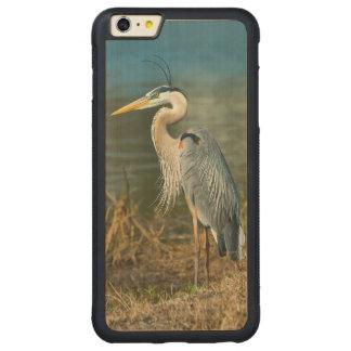 池の素晴らしい青鷲の鳥 CarvedメープルiPhone 6 PLUSバンパーケース