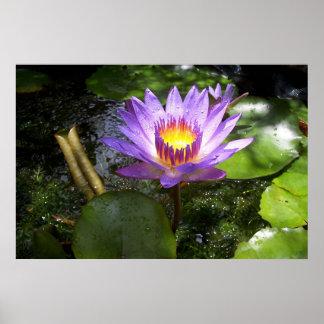 池のlilly紫色 ポスター