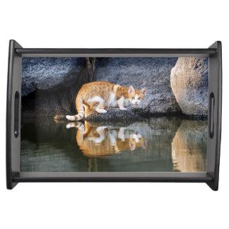 池水動物の写真の皿の猫の反射 トレー