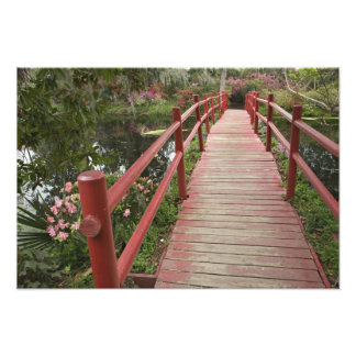 池、マグノリアのプランテーション上の赤い橋、 フォトプリント