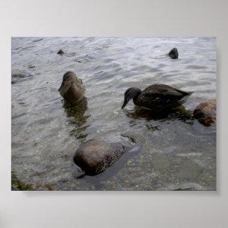 決して単独で泳がないで下さい! ポスター