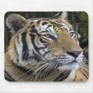沈痛なトラはマウスパッドを閉めます マウスパッド