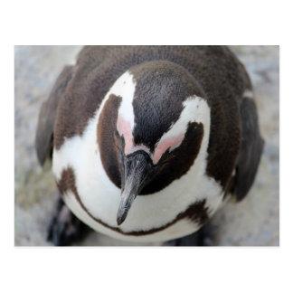 沈痛なペンギン ポストカード