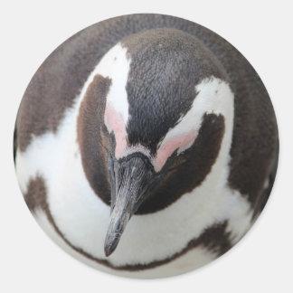 沈痛なペンギン ラウンドシール