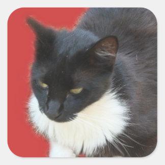 沈痛な子猫 スクエアシール