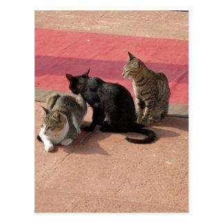 沈痛な気分の3匹の猫 ポストカード