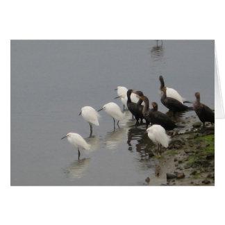 沼地の白黒鳥 カード