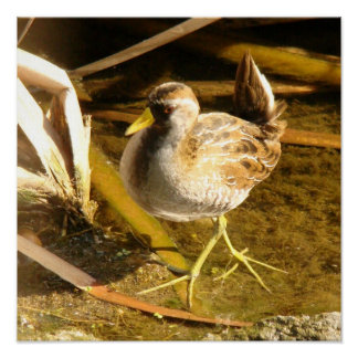 沼地の鳥の野性生物動物の写真撮影 ポスター