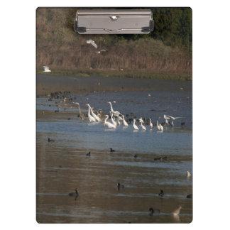 沼地の鳥の野性生物動物の非難 クリップボード