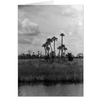 沼地ヴィスタのフロリダの沼沢地、1962年7月 カード