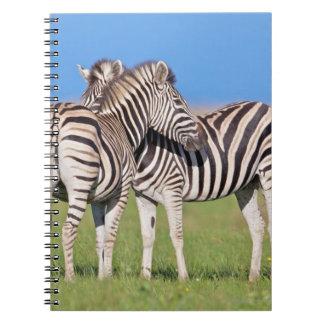 沿岸の2つの平野のシマウマ(Equusのクアッガ) ノートブック