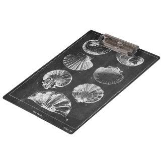 沿岸フランスのな植物の芸術の黒板の貝殻 クリップボード