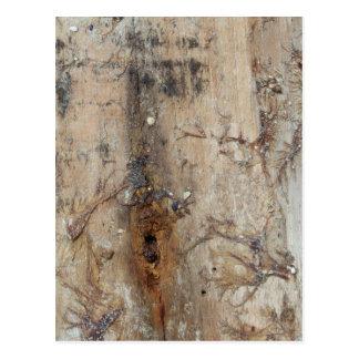沿岸流木の写真 ポストカード