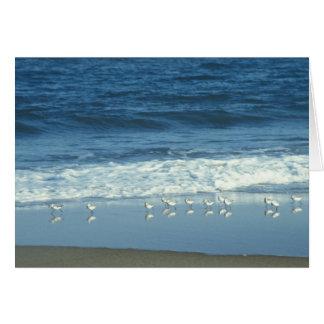 波が付いているビーチの鳥 カード