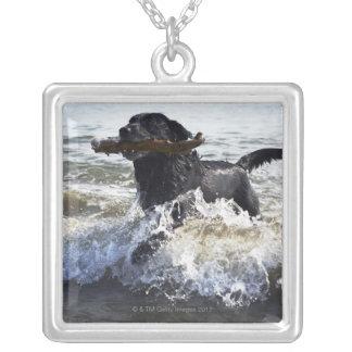 波を通る黒いラブラドル・レトリーバー犬のランニング、 シルバープレートネックレス
