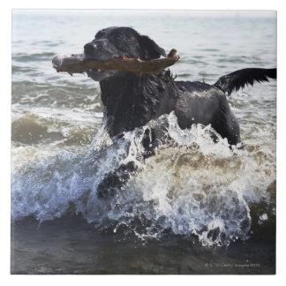 波を通る黒いラブラドル・レトリーバー犬のランニング、 タイル