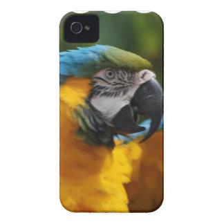 波立たせられた青および金ゴールドのコンゴウインコ Case-Mate iPhone 4 ケース