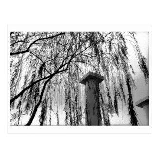 泣く木の白黒写真の下のコラム ポストカード