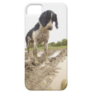 泥のテニス・ボールを見ている卑劣な奴 iPhone SE/5/5s ケース