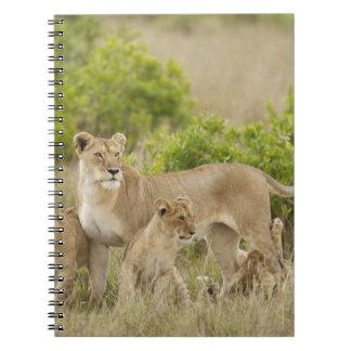 注意深い幼いこどもを持つアフリカのライオンの大人女性 ノートブック