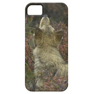 注意深く若いオオカミ(イヌ属ループス)のくんくんかぐこと iPhone SE/5/5s ケース