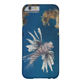 泳いでいるミノカサゴ(Pteroisのvolitans) Barely There iPhone 6 ケース