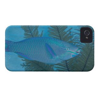 泳いでいる女王のParrotfish (Scarusのvetula) Case-Mate iPhone 4 ケース
