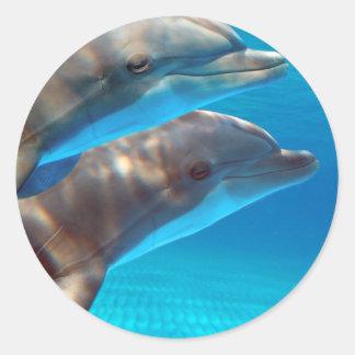 泳いでいる2頭のイルカ ラウンドシール