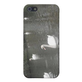 泳いでいるIphoneの場合4/4の白鳥 iPhone 5 Case