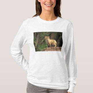 洞穴(Vulpesのvulpes)の前のアカギツネの子犬 Tシャツ