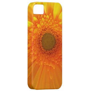 活気に満ちた黄色いガーベラのデイジー iPhone SE/5/5s ケース