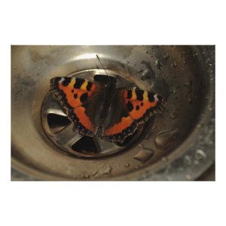 流しの小さいTortoiseshell蝶 フォトプリント