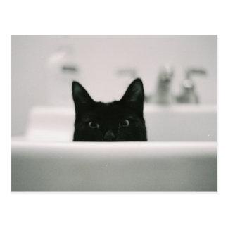 流しの黒猫 ポストカード