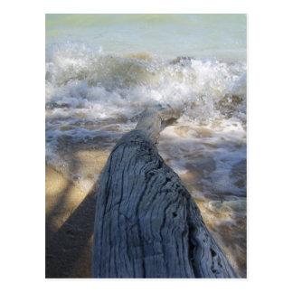 流木および波 ポストカード
