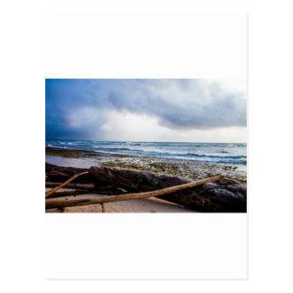 流木が付いているカウアイ島のビーチ ポストカード