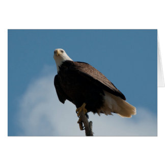 流木でとまる白頭鷲 カード