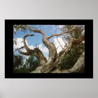 流木のイグアナ ポスター