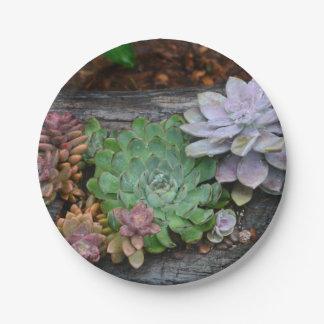流木の紙皿のSucculents ペーパープレート