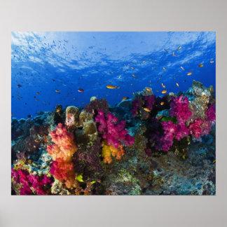 浅い礁、フィージーの柔らかい珊瑚 ポスター