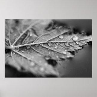 浮遊カエデの葉の水低下 ポスター
