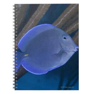 海が付いているAcanthurusのcoeruleus ノートブック