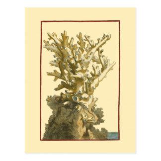 海による珊瑚 ポストカード
