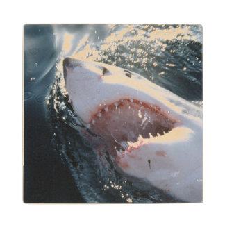 海のホホジロザメ ウッドコースター