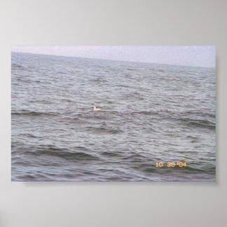 海の単独海カモメ ポスター