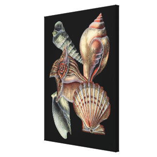 海の宝物 キャンバスプリント