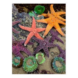 海の宝石 ポストカード