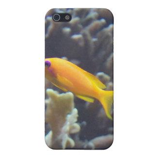 海の素晴らしさHDのiphone 4ケース-熱帯金ゴールドFi iPhone SE/5/5sケース