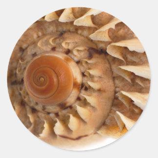海の貝のマクロ詳細 ラウンドシール